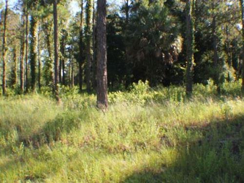 Polk County, Florida $3,995 : Polk City : Polk County : Florida