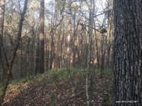 20 Ac Timberland & Hunting Adj : Sicily Island : Catahoula Parish : Louisiana