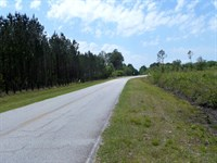 12+ Acres In Little Creek Area : Jesup : Wayne County : Georgia