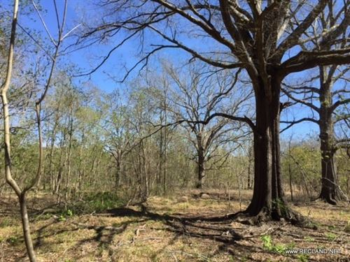 20 Ac Wooded Tract For Home Site O : Deville : Rapides Parish : Louisiana