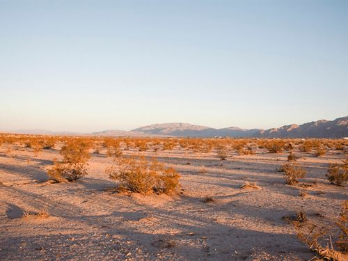 Better Than Gold : Twentynine Palms : San Bernardino County : California