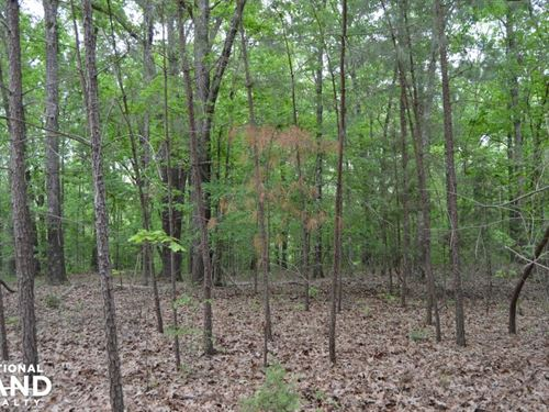 Wheeler Road Land Opportunity : Hernando : Desoto County : Mississippi