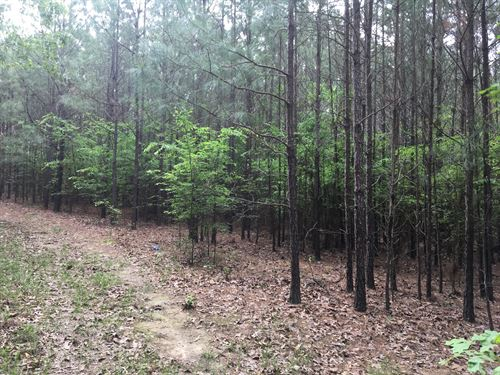 10 Ac Northwest Rankin Unrestricted : Brandon : Rankin County : Mississippi