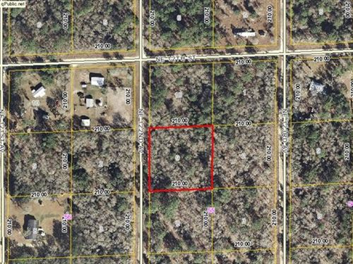 1 Acre Great New Home Site 773619 : Williston : Levy County : Florida