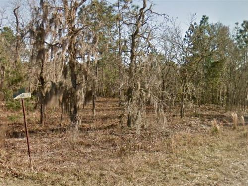 Levy County, Fl $25,000 Neg : Williston : Levy County : Florida
