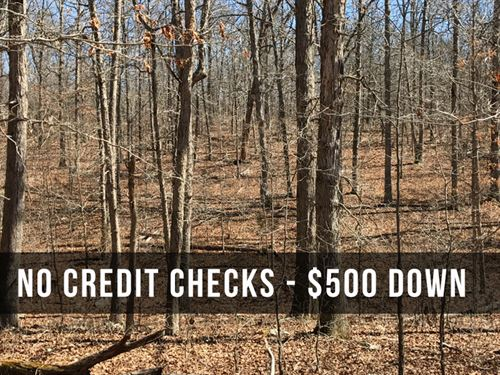 10 Acres Full Of Dear & Turkey : Mountain View : Howell County : Missouri