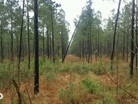 Secluded Homesite : Burgaw : Pender County : North Carolina