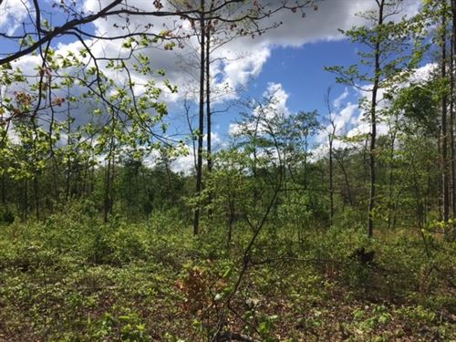5.03+/-Acres Unrestricted W Creek : McMinnville : Warren County : Tennessee