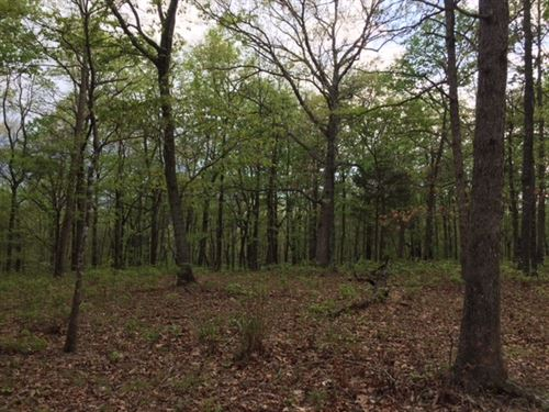9.52+/- Acres Beautiful Hardwoods : Sewanee : Marion County : Tennessee