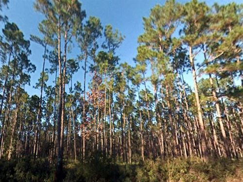 Putnam County, Florida $20,000 Neg : Palatka : Putnam County : Florida