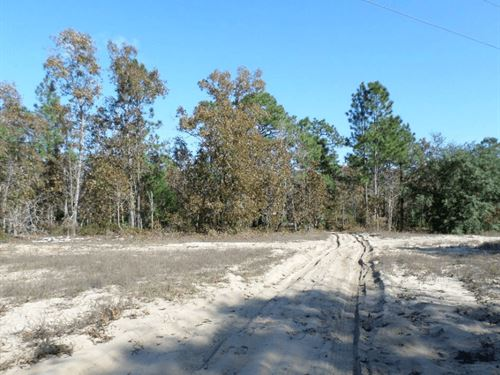 .57 Acres In Keystone Heights, Fl : Keystone Heights : Clay County : Florida