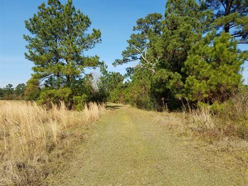 East Texas Log Cabin On 20 Acres : Lufkin : Angelina County : Texas