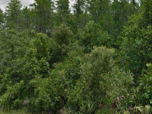 Polk County, Fl $16,000 Neg : Polk City : Polk County : Florida