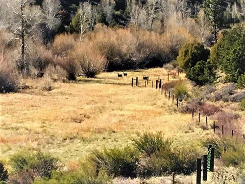 Bear Creek, Lot 118 : South Fork : Rio Grande County : Colorado