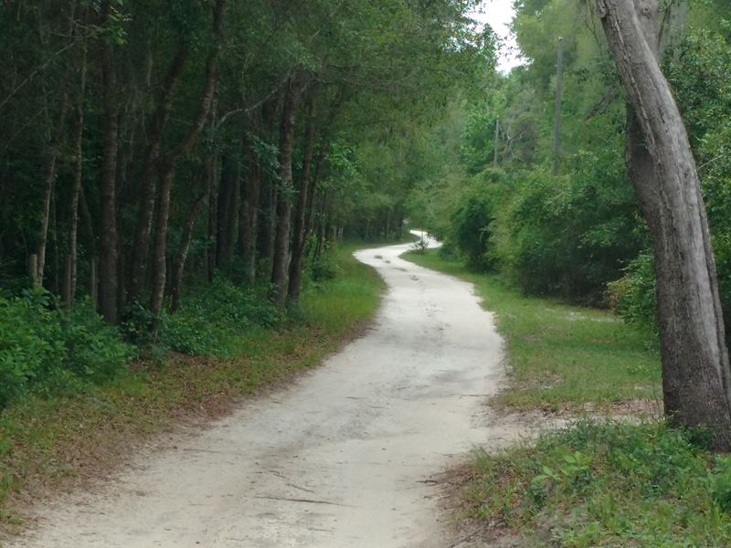Enchanted Canopy Oaks : Brooksville : Hernando County : Florida