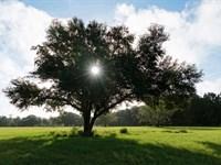Lakefront Liquidation Orlando Area : Groveland : Lake County : Florida