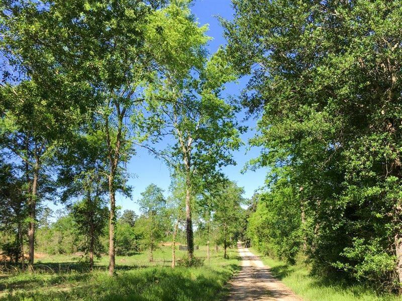 19.06 Acres Fm 2989 : Huntsville : Walker County : Texas