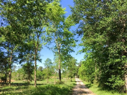 19.83 Acres Old Sign Road : Huntsville : Walker County : Texas