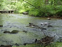 True Trout Stream - Pasture-Woods : Ellijay : Gilmer County : Georgia