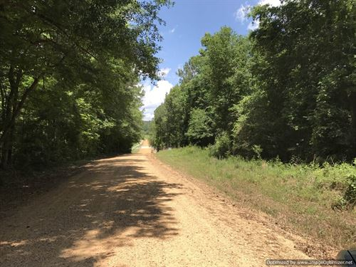 Heavily Timbered Private Hunting : Smithdale : Franklin County : Mississippi
