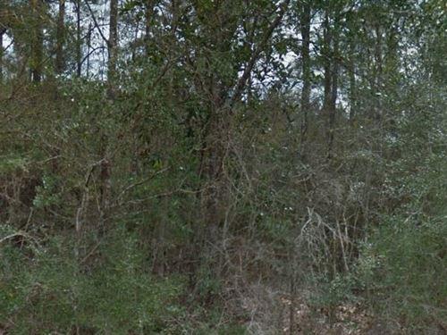 Tyler County, Tx $9,999 Neg : Wildwood : Tyler County : Texas