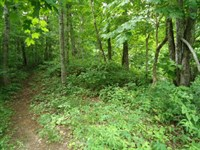 5.19 Acres Wooded In Clay Co. : Celina : Clay County : Tennessee