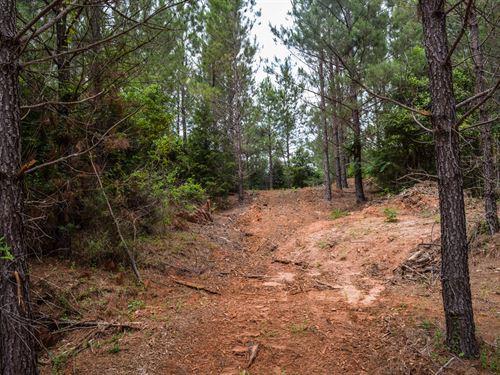 11.78 Acres On Walnut Grove Road : Roebuck : Spartanburg County : South Carolina