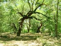 Rolling Ranch Estates 4.5 Acres : Dunnellon : Marion County : Florida