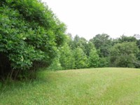 9.05 Wooded Acres In Clay County : Celina : Clay County : Tennessee