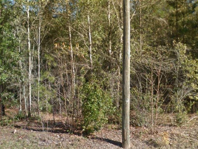 Levy County, Fl $26,000 Neg : Williston : Levy County : Florida