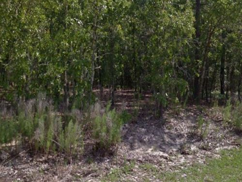 Citrus County, Fl $56,000 Neg : Inverness : Citrus County : Florida