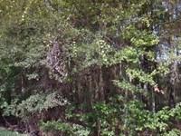 Duval County, Fl $140,000 Neg : Jacksonville : Duval County : Florida