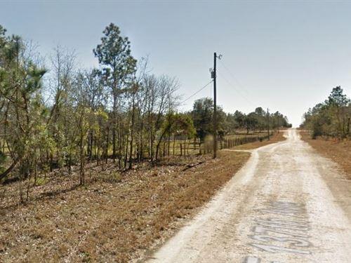 Levy County, Fl $20,000 Neg : Williston : Levy County : Florida