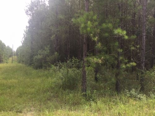 8 Acre Home Site For Sale On Big Hi : Sumrall : Lamar County : Mississippi