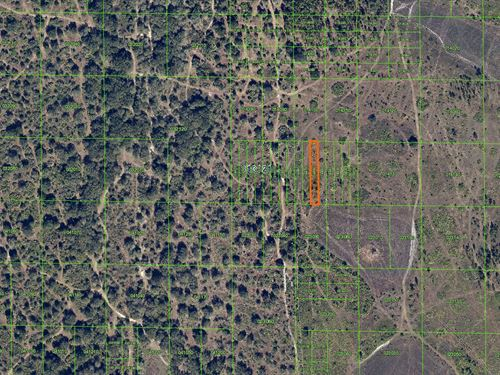 .31 Acres In Lake Wales, Fl : Lake Wales : Polk County : Florida