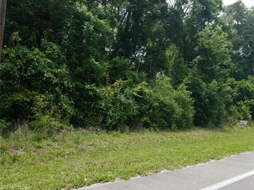 Vacant Wooded Lot 773986 : Fanning Springs : Gilchrist County : Florida
