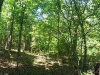 Beaverdam Creek Tract : Travelers Rest : Greenville County : South Carolina