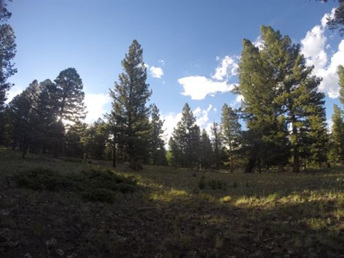 5575413 - Premium, Oversized & : Buena Vista : Chaffee County : Colorado