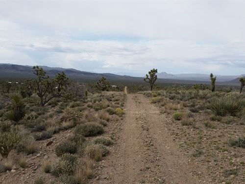 Amazing Joshua Tree Forest : Dolan Springs : Mohave County : Arizona