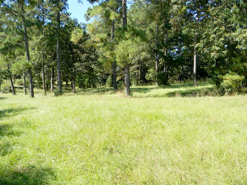 Large Rural Residential Property : Trinity : Trinity County : Texas