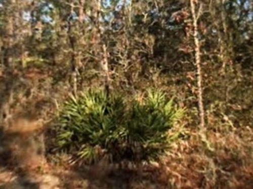 Hernando County, Fl $40,000 Neg : Webster : Hernando County : Florida