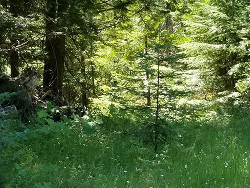 Thimbleberry Lane : Sandpoint : Bonner County : Idaho