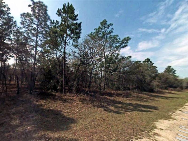 .23 Acres In Citrus Springs, FL : Citrus Springs : Citrus County : Florida