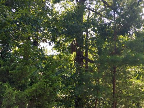 9 Acres Located At Scatter Creek : Paragould : Greene County : Arkansas