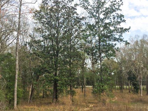 9 Acres Hwy 96 Japer, Tx : Jasper : Texas