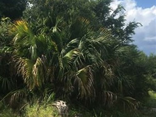 5 Acres Industrial Land In Umatilla : Umatilla : Polk County : Florida