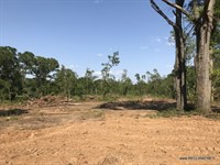 16.5 Ac - Rural Home Site Tract Wit : Choudrant : Lincoln Parish : Louisiana