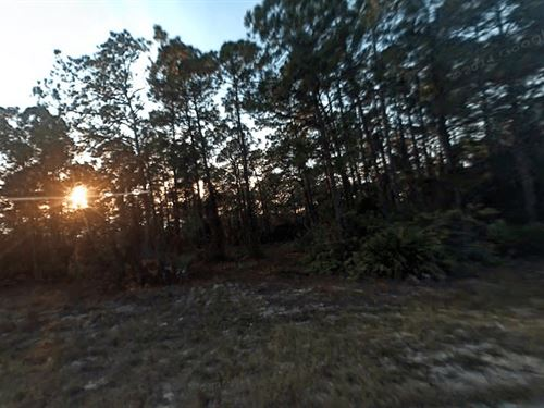 .5 Acres In Lehigh Acres, FL : Lehigh Acres : Lee County : Florida