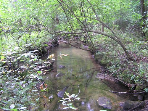 Creek, Woods, Owner Finance : Dunlap : Sequatchie County : Tennessee