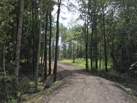 7 Acres Between Hattiesburg/Sumrall : Sumrall : Lamar County : Mississippi